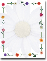 Imprintable Blank Stock - Daisies Letterhead by Masterpiece Studios
