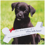 Checkerboard Digital Holiday Photo Cards - Doggie Dreams (HLG-GXR-E)